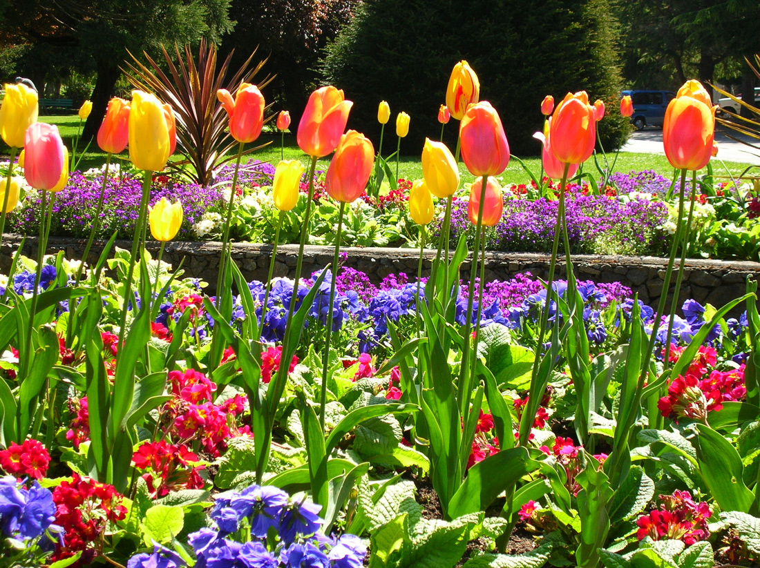 Flowers at Abkhazi Garden