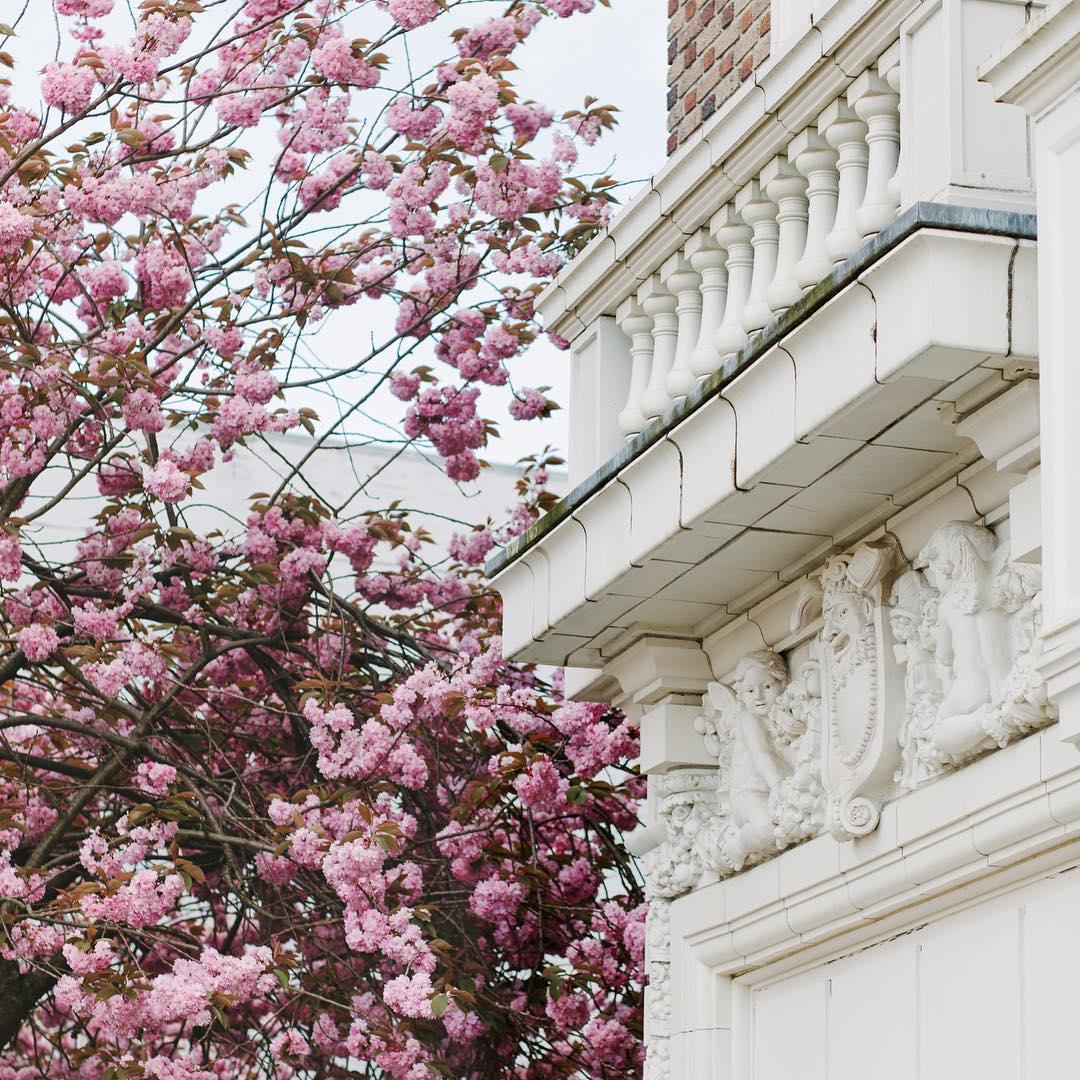 Cherry Blossom Victoria
