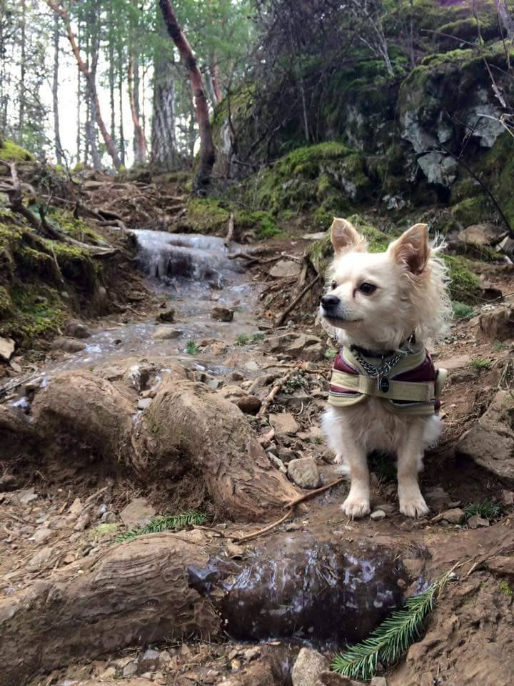 Best Places to Take Your Dog in Victoria | Tourism Victoria