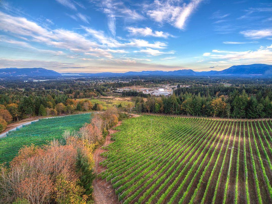 Averill Creek Winery