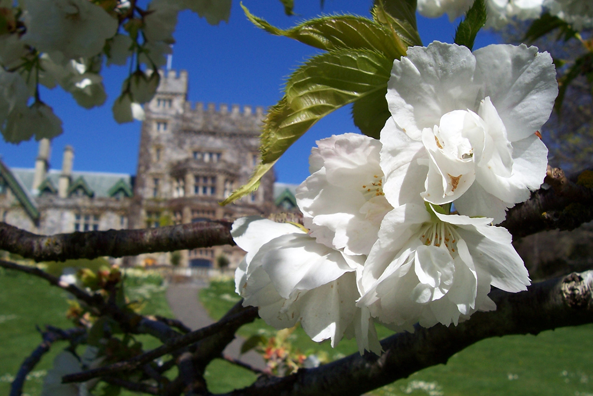 Spring blossoms at Hatley Castle