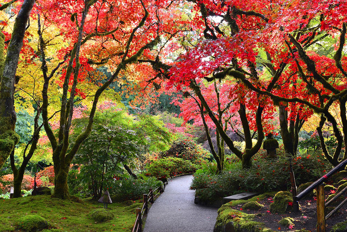 Butchart Gardens in the fall