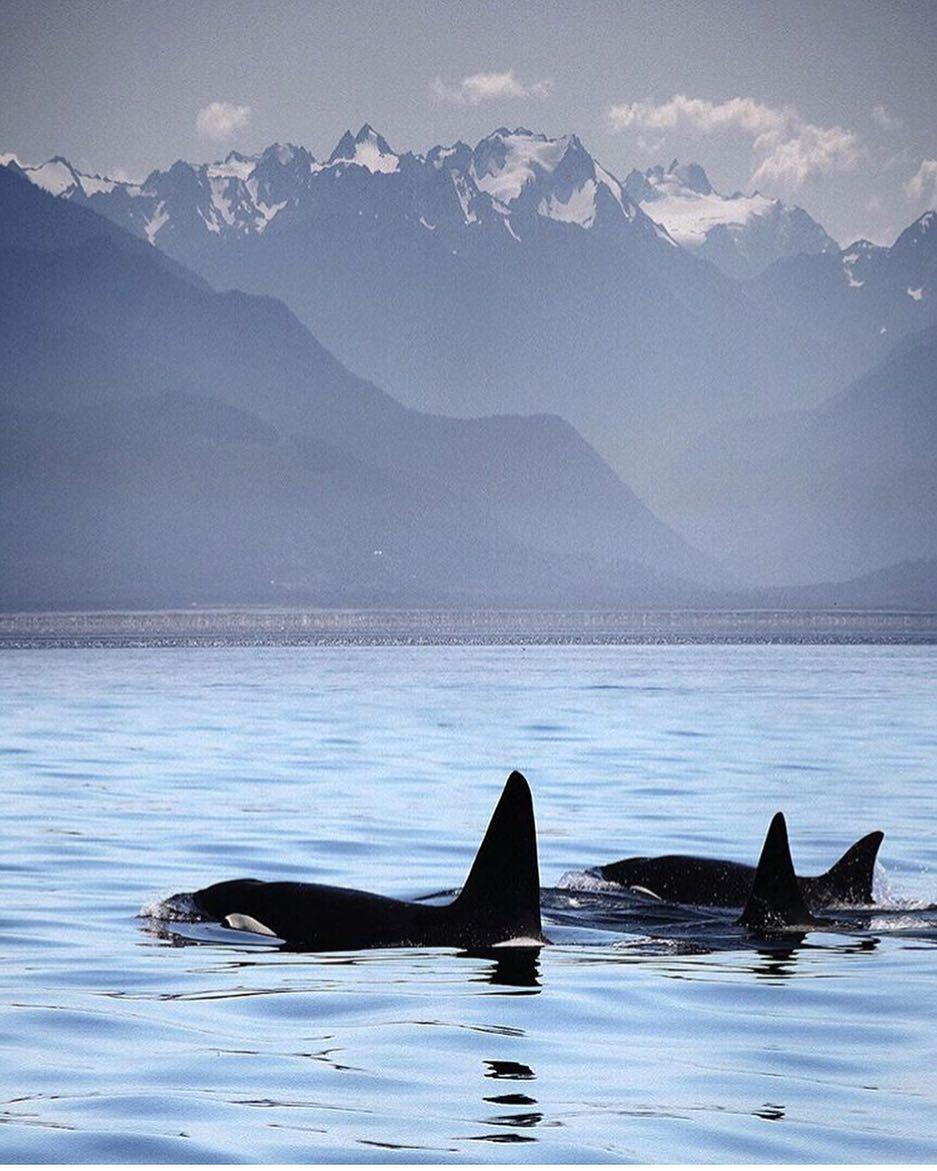 Orcas Victoria BC Canada