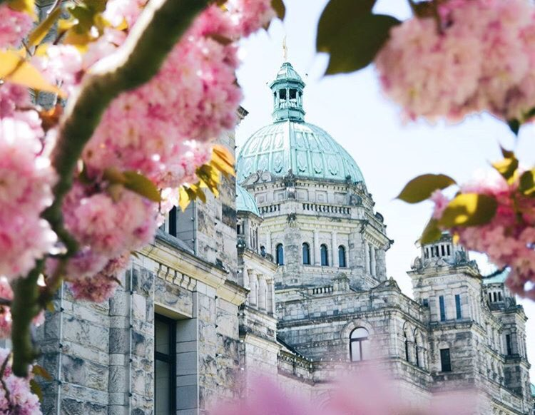 BC Parliament Buildings Cherry Blossom Victoria