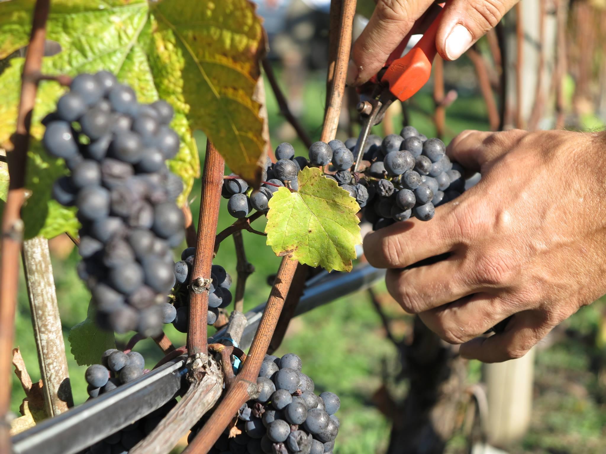 emandare wine