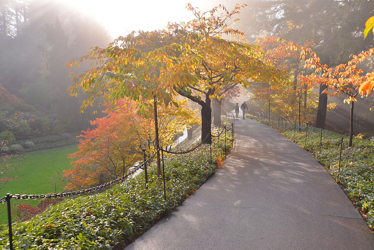 Top Places to See Fall Foliage Around Greater Victoria | Tourism ...