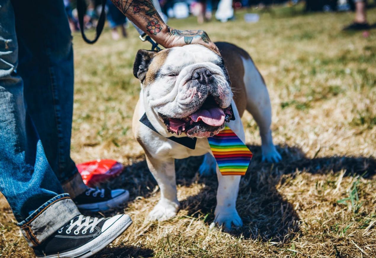 The Big Gay Dog Walk
