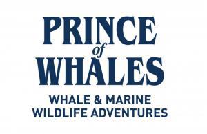 Whale and marine wildlife adventures!