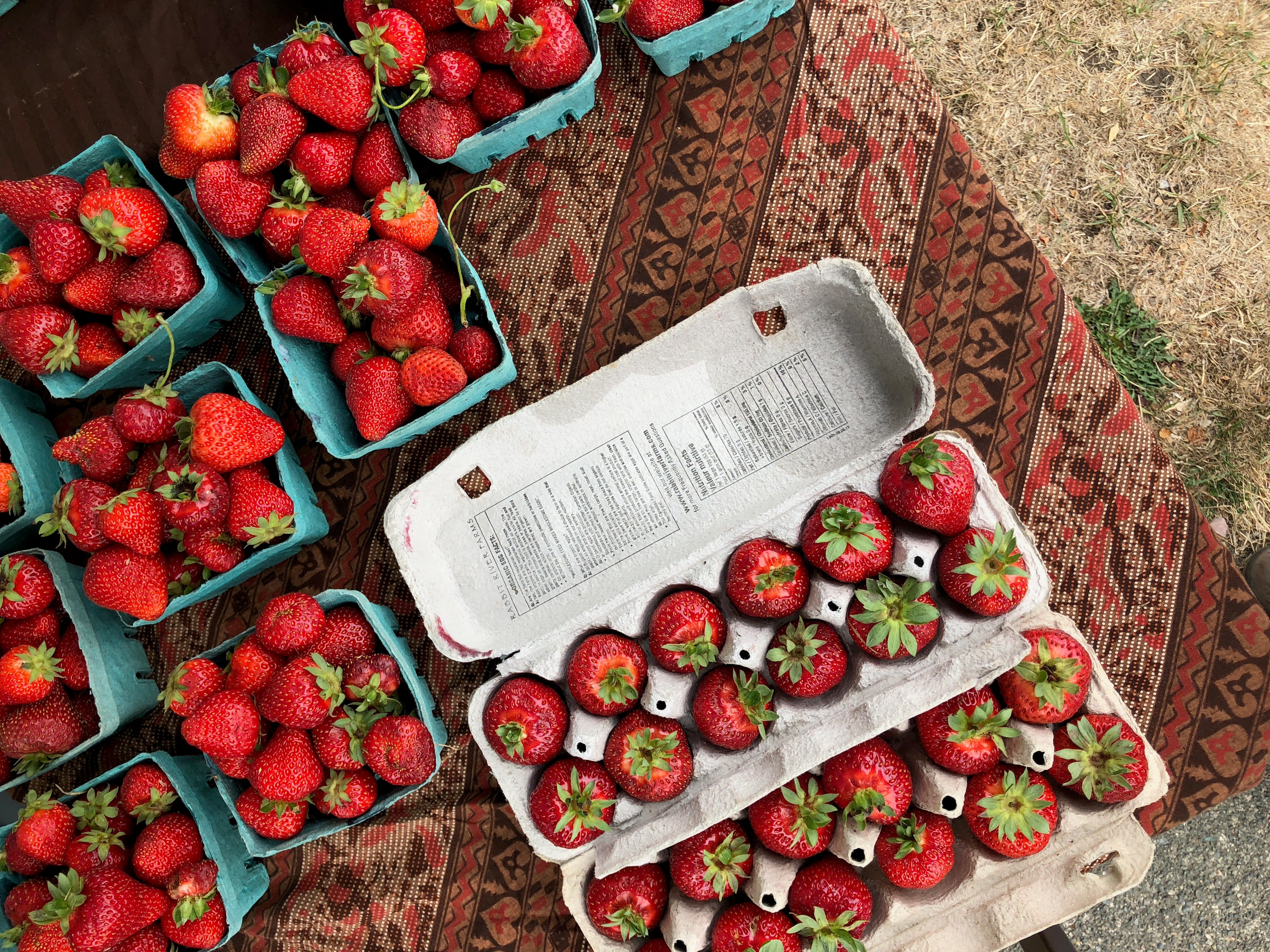 Summer Market Guide